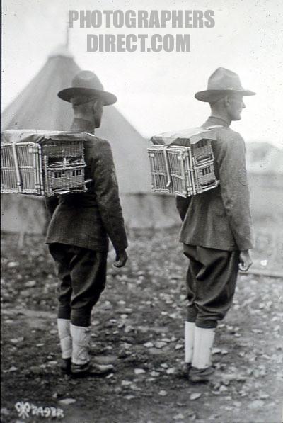 Голубь символ войны... первой мировой войны! (Фото 3)