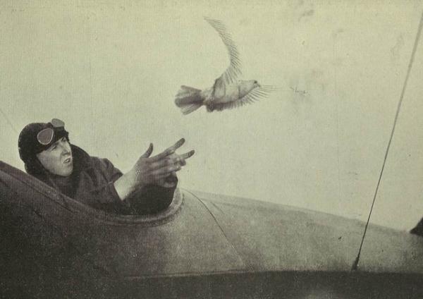 Голубь символ войны... первой мировой войны! (Фото 9)