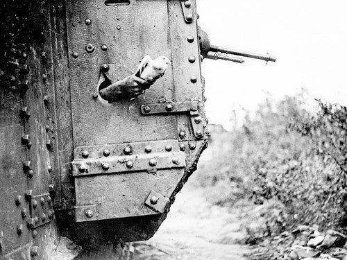 Голубь символ войны... первой мировой войны! (Фото 8)