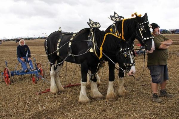 Выставка паровых машин – Great Dorset Steam Fair (Фото 12)