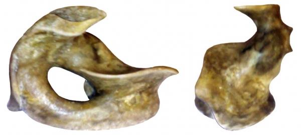 Мышь ортопедическая (Фото 6)