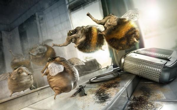 пчёлы - мутанты