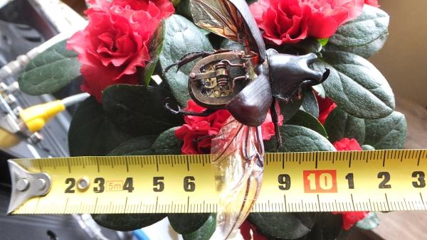 Insectus mechanikus (Фото 15)