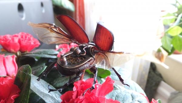 Insectus mechanikus (Фото 12)