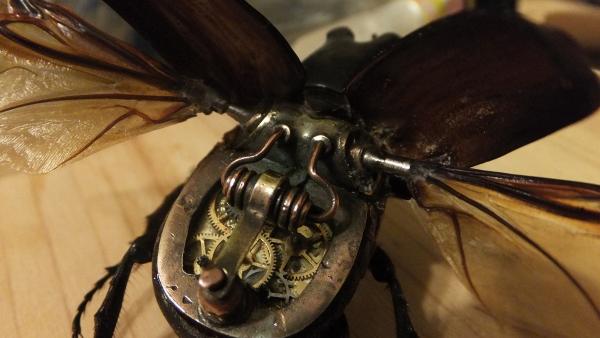 Insectus mechanikus (Фото 11)