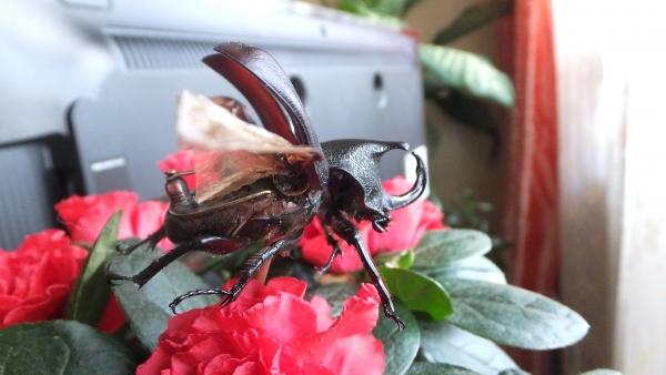 Insectus mechanikus