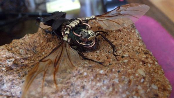 Insectus Второй (Фото 8)