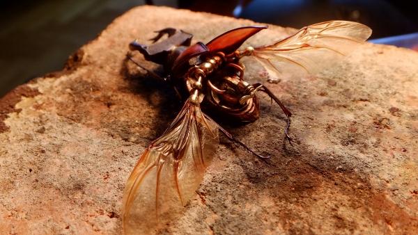 Insectus Второй (Фото 9)