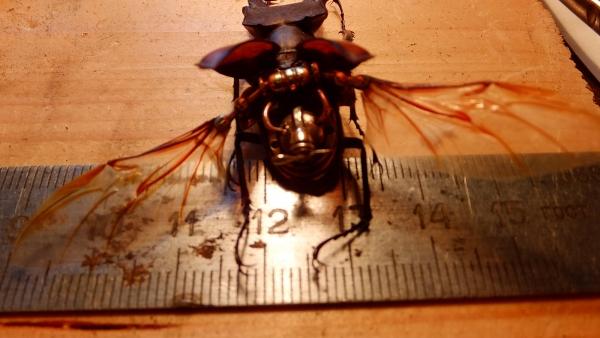 Insectus Второй (Фото 12)