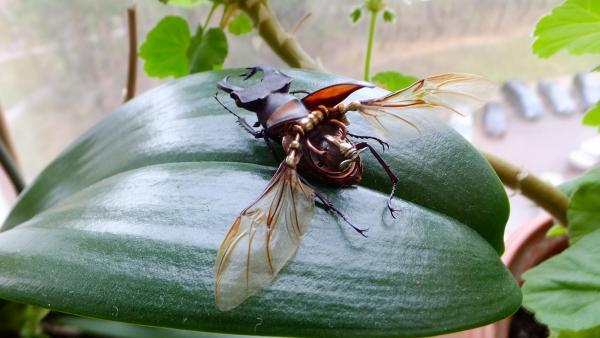 Insectus Второй
