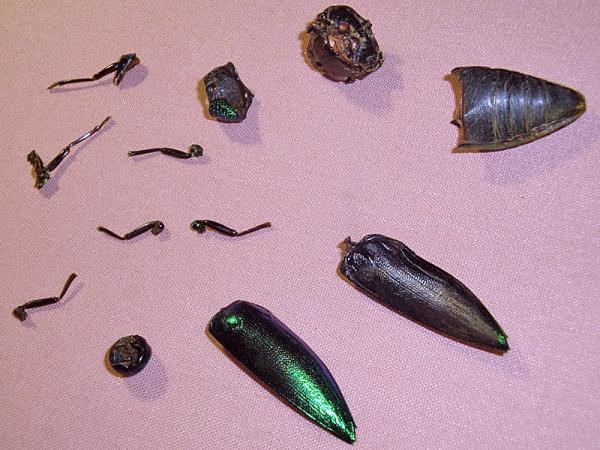 Мои насекомые Steampunk bugs. Жук-Пулемет.