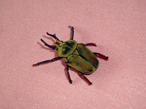Мои насекомые Steampunk bugs. Жук-Рогач. (Фото 2)