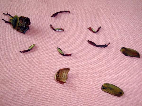 Мои насекомые Steampunk bugs. Жук-Рогач. (Фото 3)
