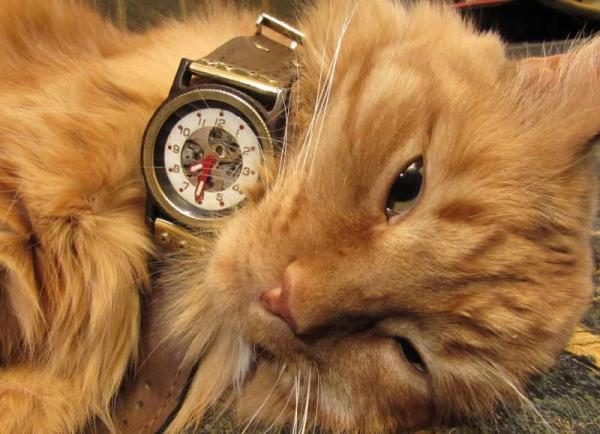 Часы воздухоплавателя. Экспериментальный корпус.