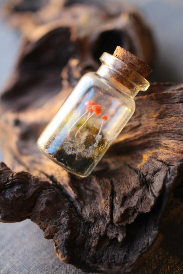 бутылочка с грибами:)