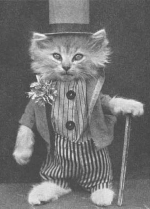 Поздравляю с Днем Котов, Котят и Кошек!