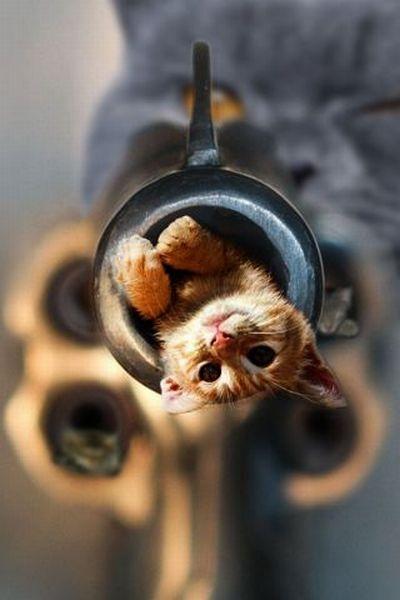 КотЭпанк или Мартовские коты) (Фото 21)