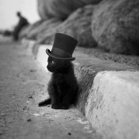 КотЭпанк или Мартовские коты) (Фото 13)