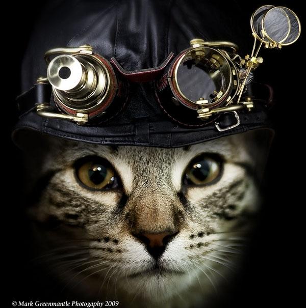 КотЭпанк или Мартовские коты) (Фото 2)