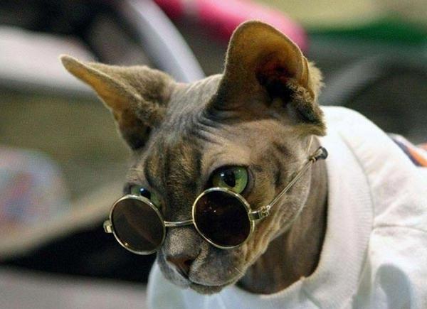 КотЭпанк или Мартовские коты) (Фото 23)