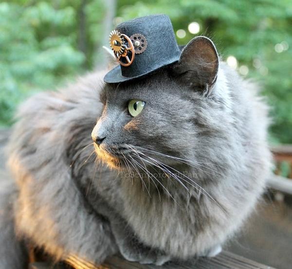 КотЭпанк или Мартовские коты) (Фото 17)