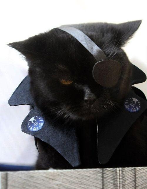 КотЭпанк или Мартовские коты) (Фото 22)