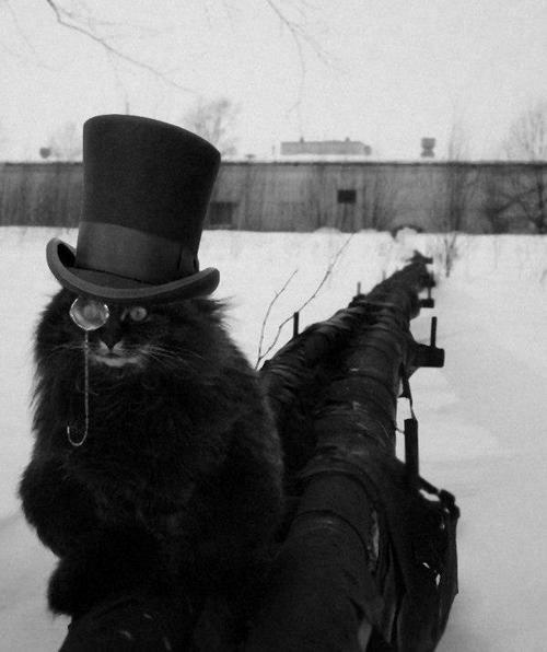КотЭпанк или Мартовские коты) (Фото 14)