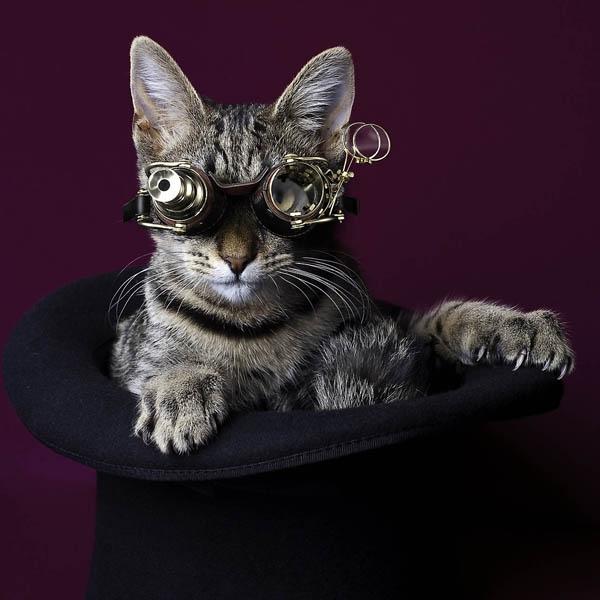 КотЭпанк или Мартовские коты) (Фото 3)