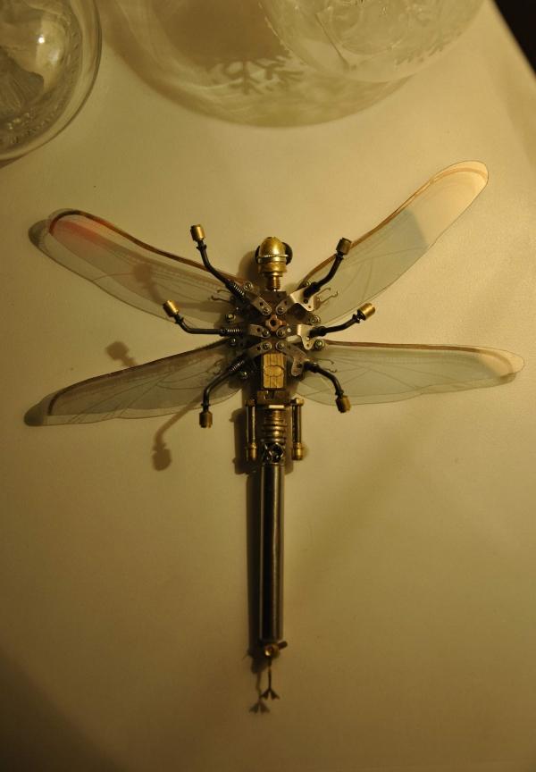 Анкерная стрекоза (Фото 8)