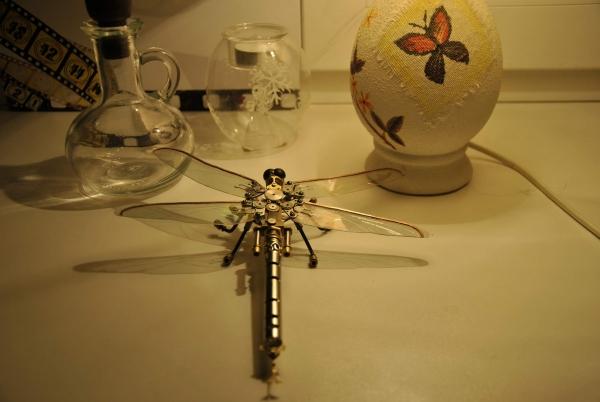 Анкерная стрекоза (Фото 3)