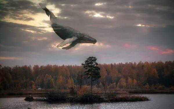 Философия полёта