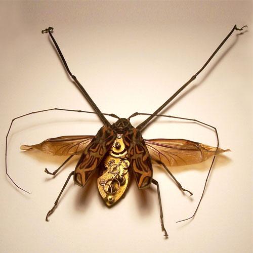 Стимпанк насекомые от Insect Lab