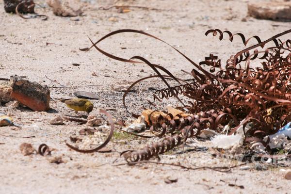Пески забвения.... (Фото 3)