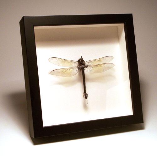 Стимпанк насекомые от Insect Lab (Фото 3)