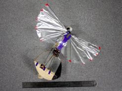 Большие достижения миниатюрных  орнитоптеров (Фото 3)